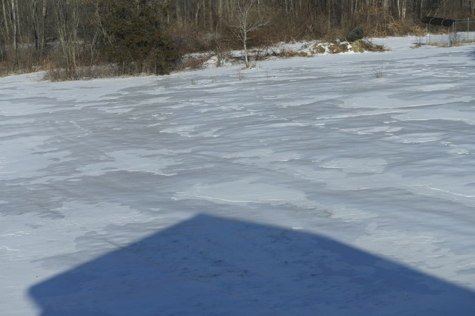 our iced over back yard