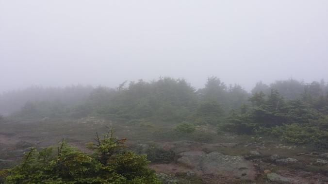 Fog bank, Mt. Pierce