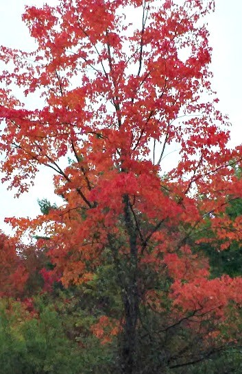 Hinsdale NH tree October 2016